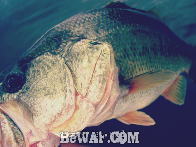 biwako bass fishing guide kakuyasu 37