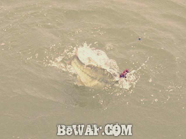 biwako bass fishing guide gekiyasu rental 31