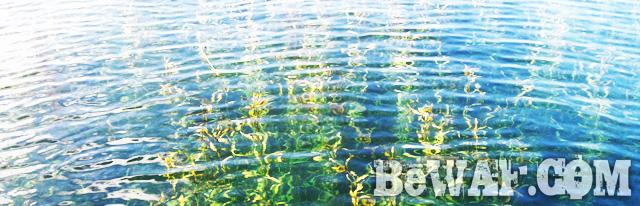 biwako bass fishing guide gekiyasu rental 9