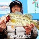 琵琶湖へ (2017年 3月25日) プリプリ49センチ