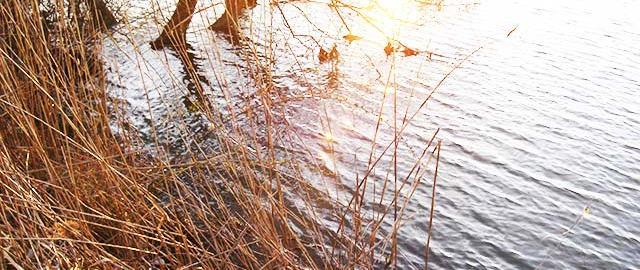 2月28日 琵琶湖内湖 写真