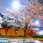 2017年4月15日 瀬田川の夜桜