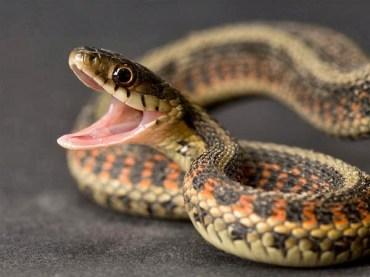 ularrrrrrrrrr