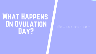 Photo of What Happens On Ovulation Day