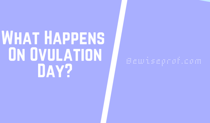 What Happens On Ovulation Day