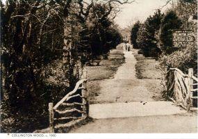 Collington Wood c1900