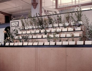 MUS-026 - Bexhill Museum, Wild Flower Table, July 1967