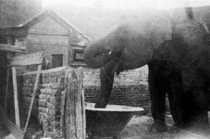 SID-029 - Elephants at Ingrams Farm, Sidley 1930s