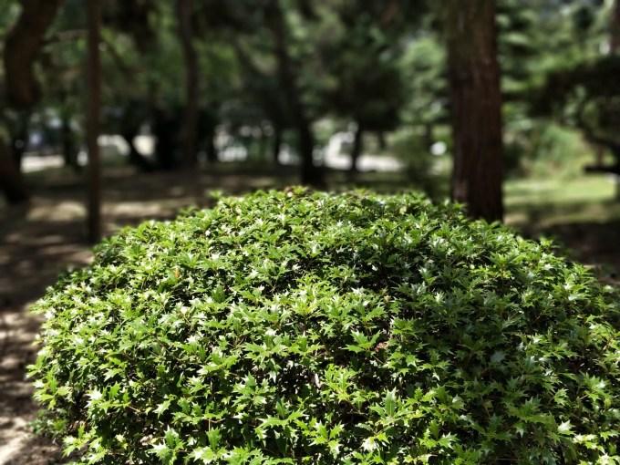 OnePlus5  VS  Xiaomi Mi6  裏庭の木々 ノーマル