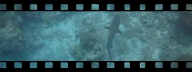 Hai auf der Jagd