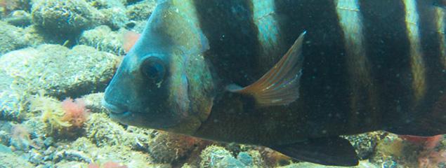 Neuer Tauchbericht online – Tauchen auf Madeira 2013