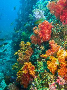 Korallenriff Oman 2013