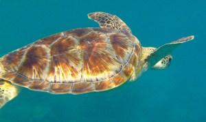 Meeresschildkröte - Unterwasserfilm verbessern