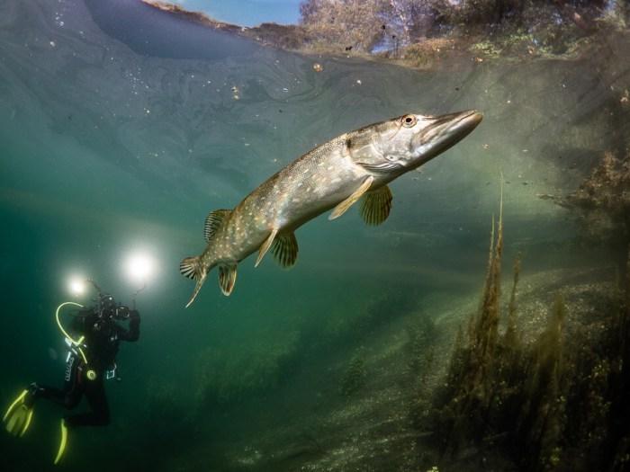 Weitwinkel unter Wasser