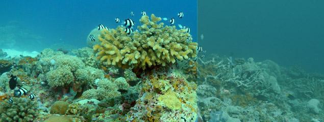 Farbkorrektur von Unterwasservideos – Tutorial komplett überarbeitet
