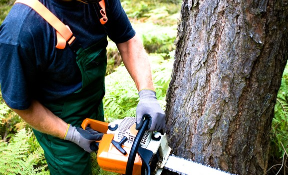 Improving Forest Safety