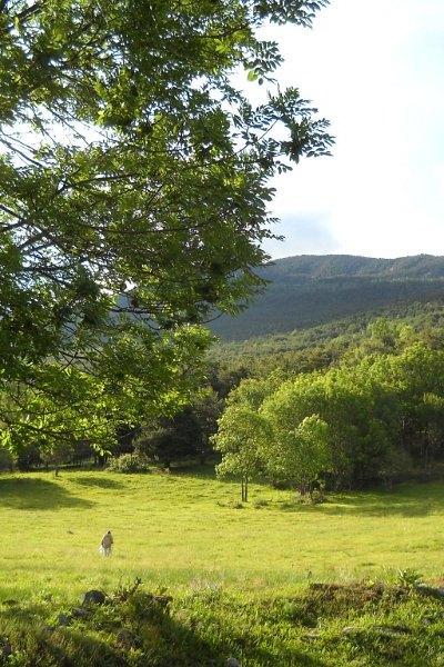 hik-Pirineu (2)