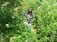 Joe emerging from the nettles we battled through. we literally cut and trampled a good 50 metres to make an exit route.