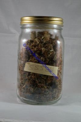 Mason jar with cannabis buds BeyondChronic.com