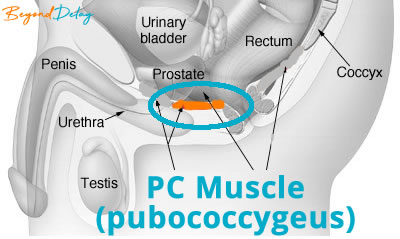 PC Muscle