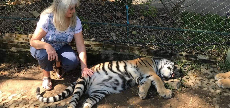 Tiger Kingdom Chaing Mai Thailnad