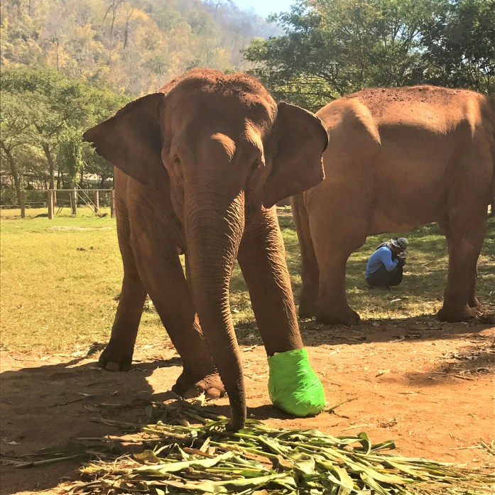 elephant injured landmine