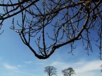Twenty twirls of twigs13