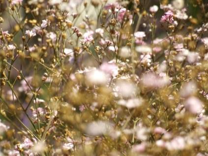 Mysticism & Flowerage 5