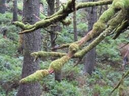 Heceta Head Trail 004