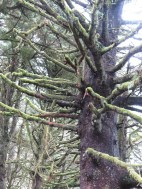 Heceta Head Trail 007