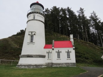Heceta Head Trail 015