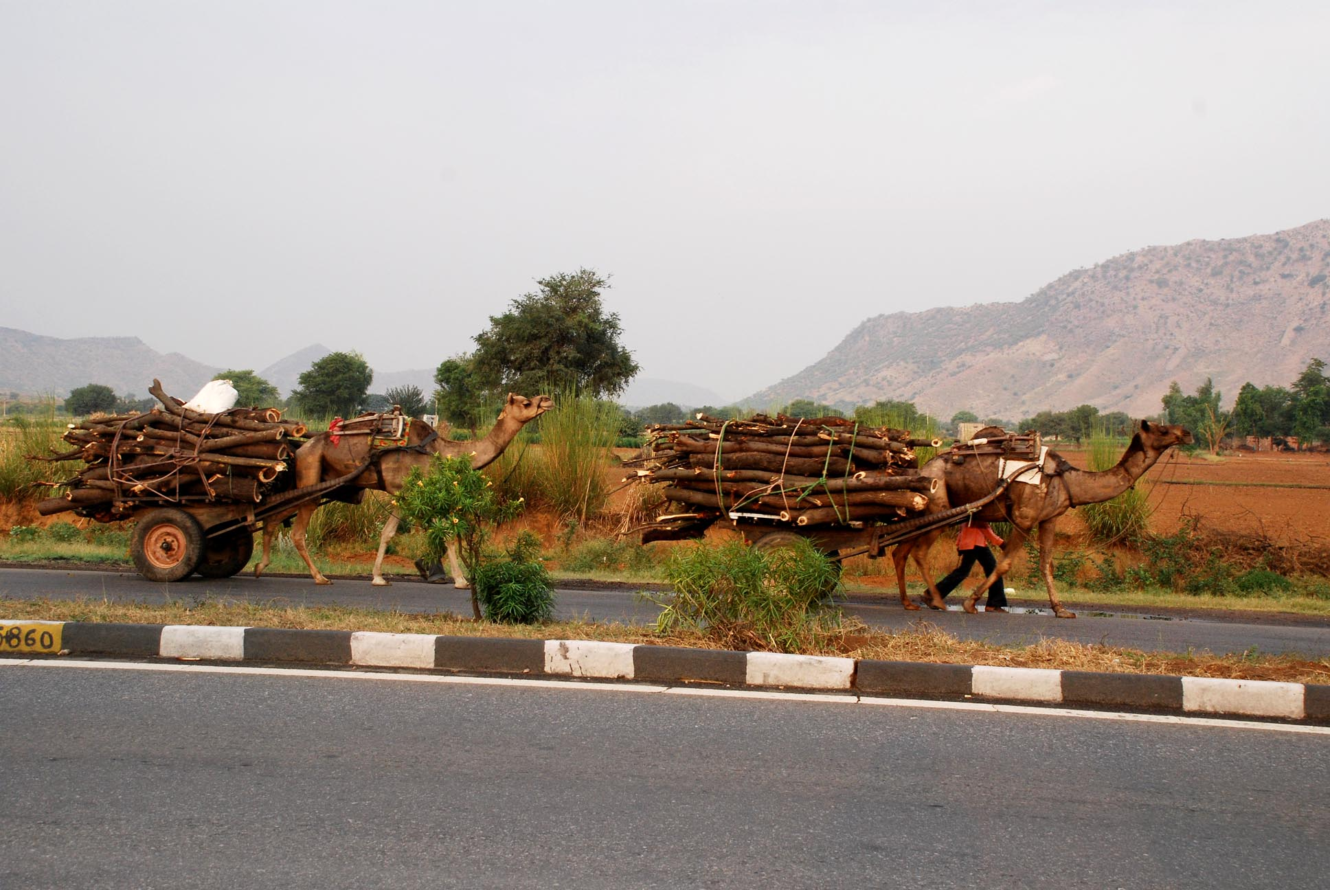 You know you are in Rajasthan when....