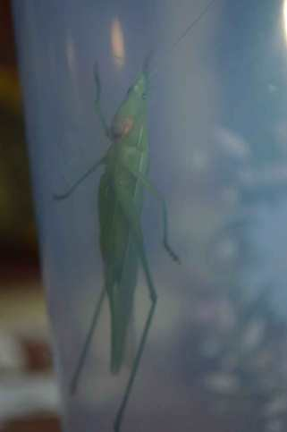 Photo of a bug in a jar we caught at home