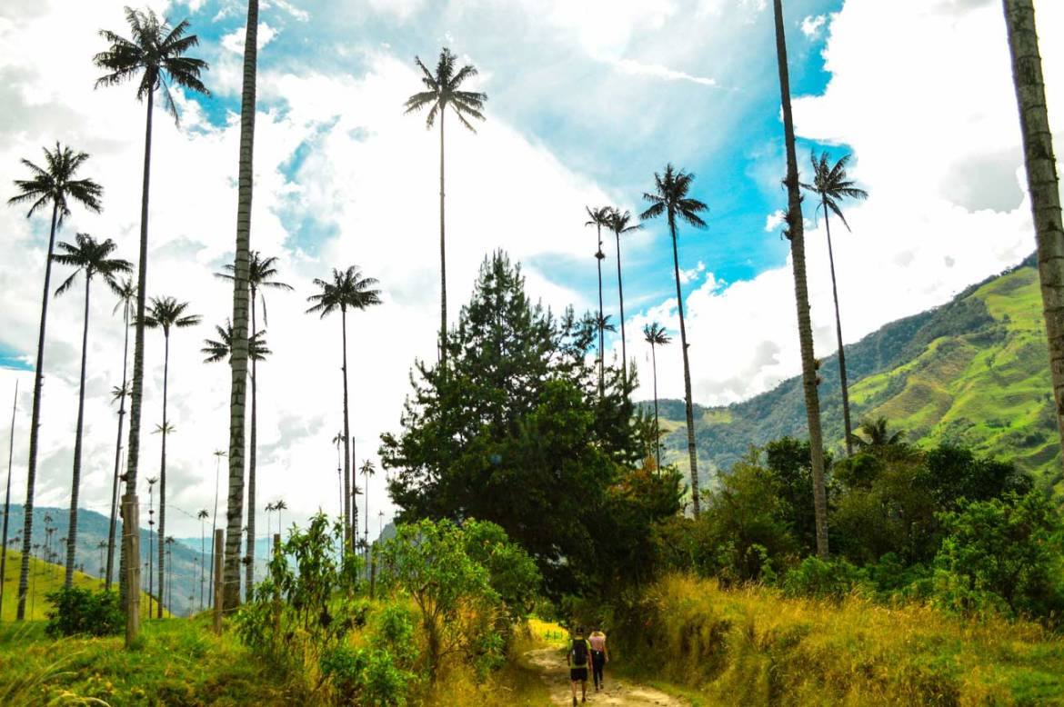 Salento Colombia beautiful cocora valley,