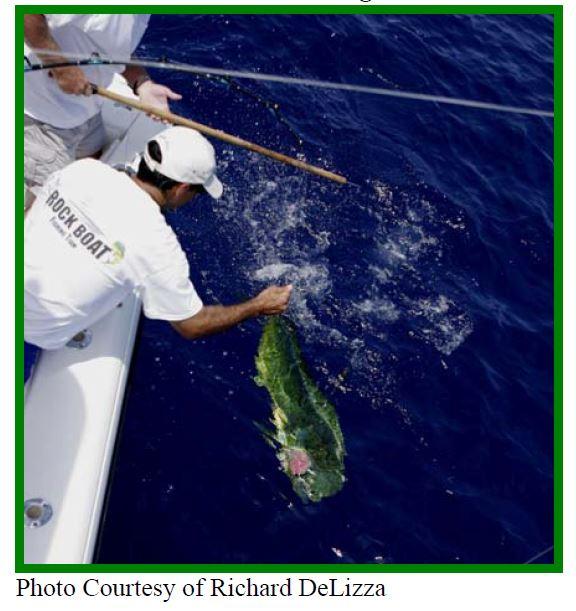 common dolphinfish, dolphinfish, mahi mahi, dorado