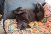 Flair in Deep Doggie Sleep