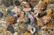 Shells 1