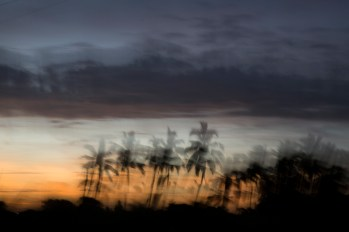 Palms and sunset - movement