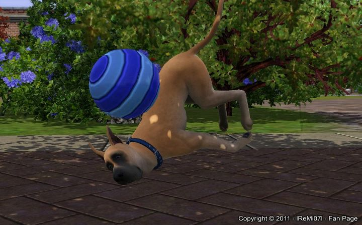 Official PR:  The Sims 3 Pets is available on Store Shelves Today!
