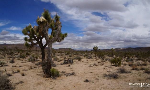 Transe du désert, de Joshua Tree à Palm Springs !