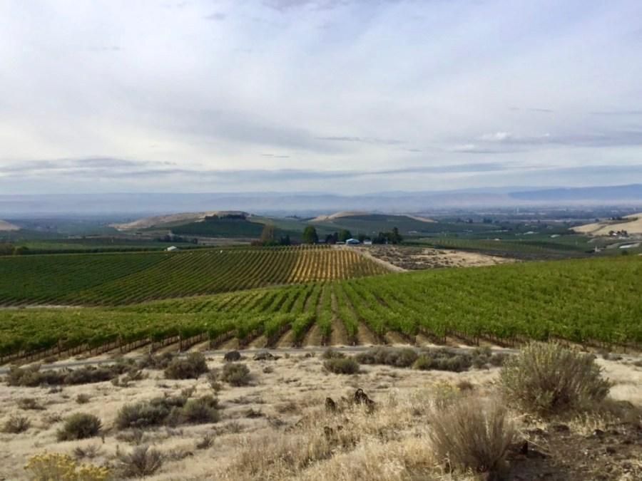 A Taste of the Yakima Valley on Elephant Mountain