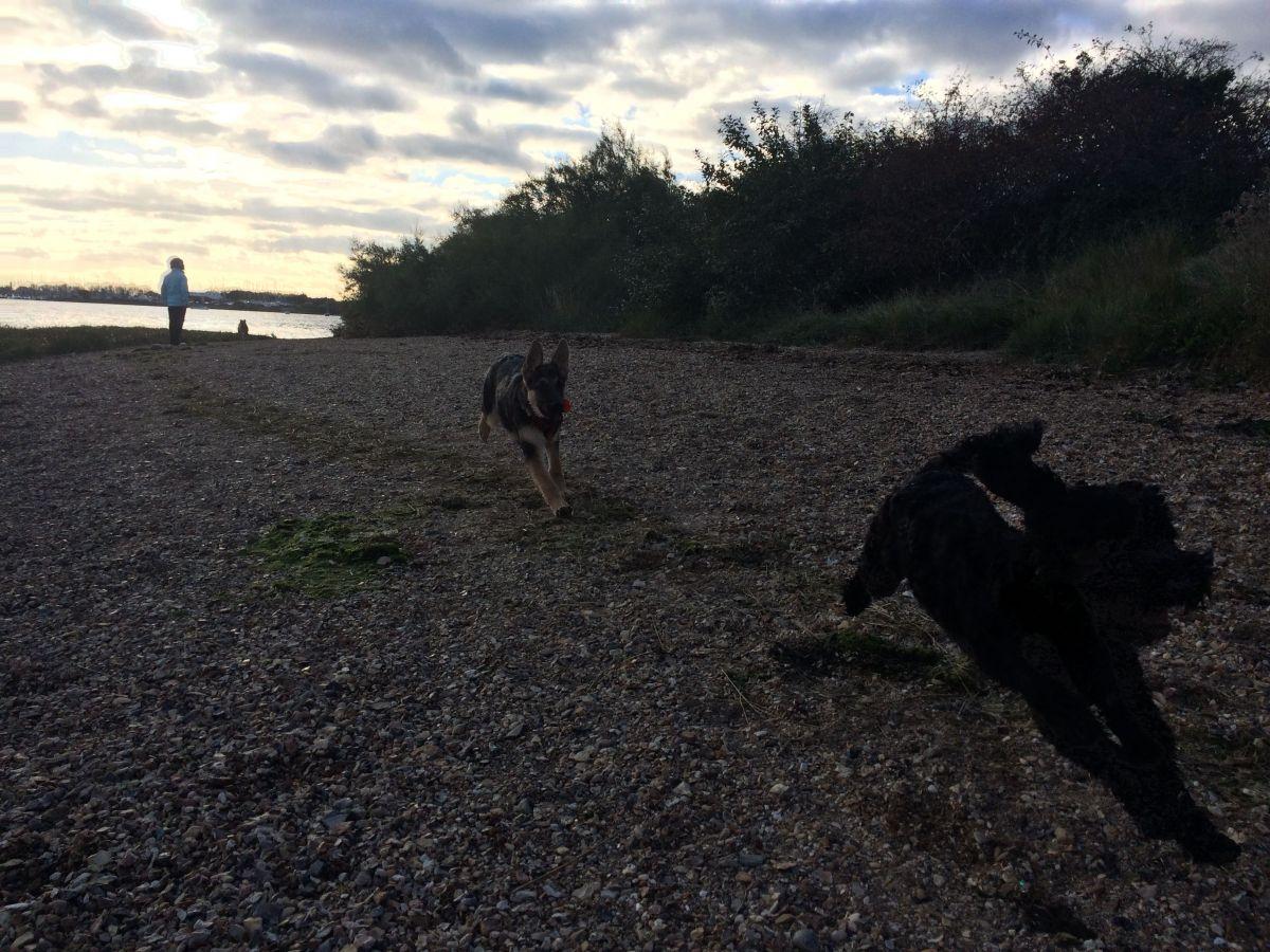 Luna and Lola at the sea side