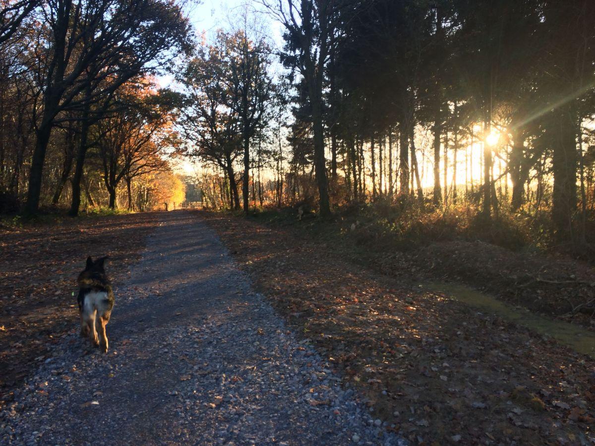 Countryside stroll