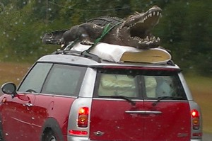 Crocodile on car