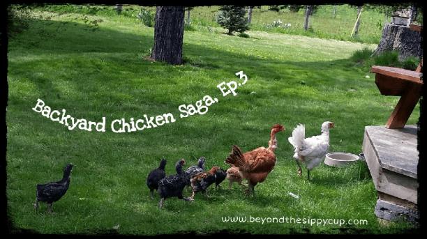 chickensagaep3