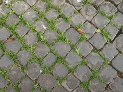 Rome paving & grass