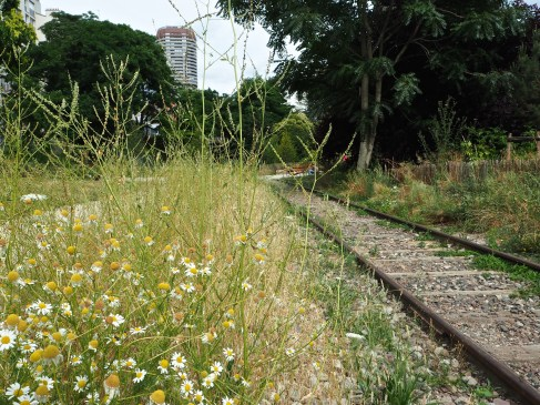 A strip of wild vegetation between the surfaced footpath and the remaining rails