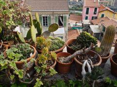 Breakfast view from a B&B terrace in Ventimiglia - April 2016