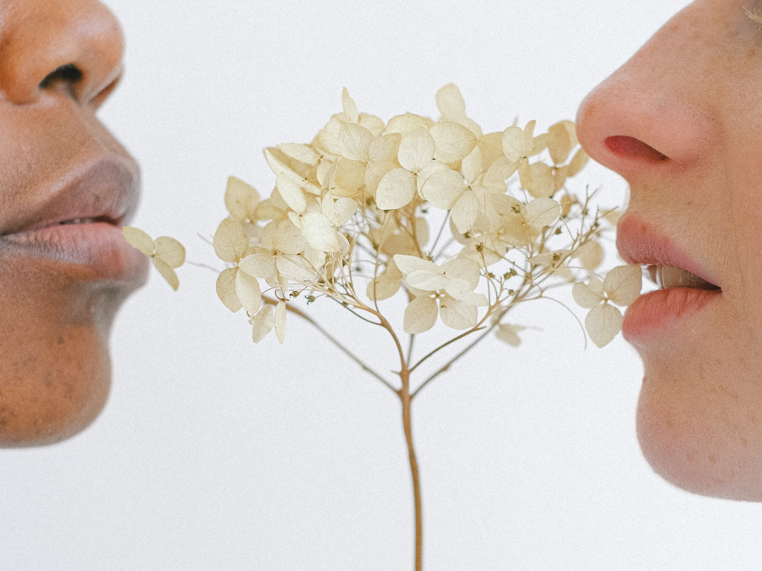 people-holding-white-flowers-close-to-their-lips-4557466