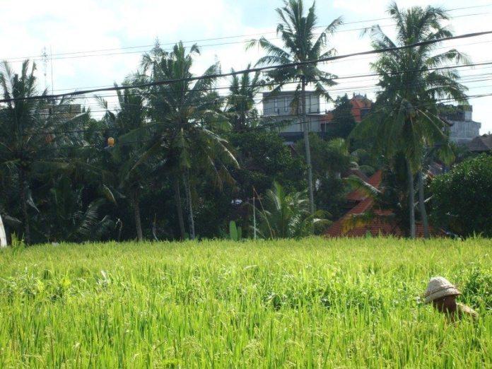 čo vidieť na Bali